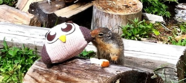 Owly and his wilderness friend