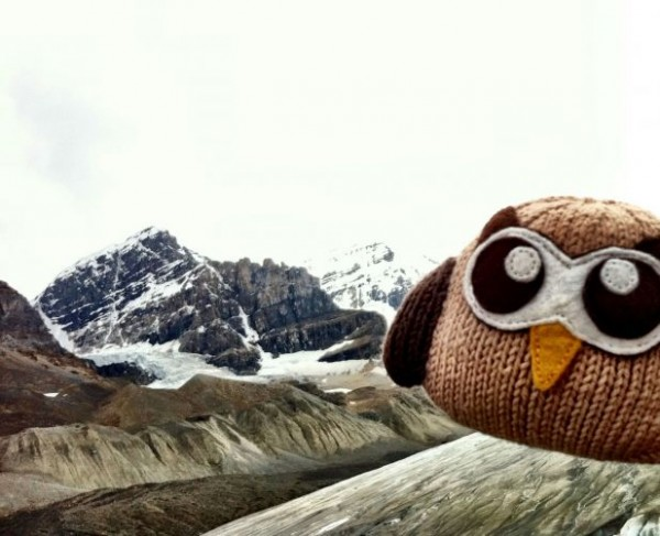 Owly in the winter