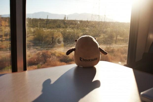 Owly enjoying the view on #HootTrak