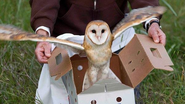 owly mydash