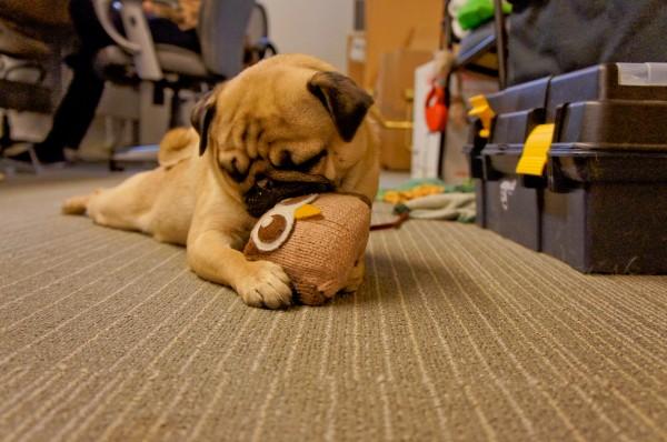 hootdog-monty