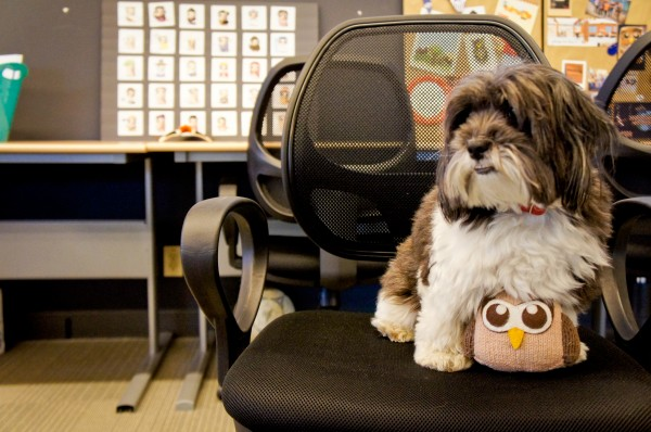 hootdog-akira-owly