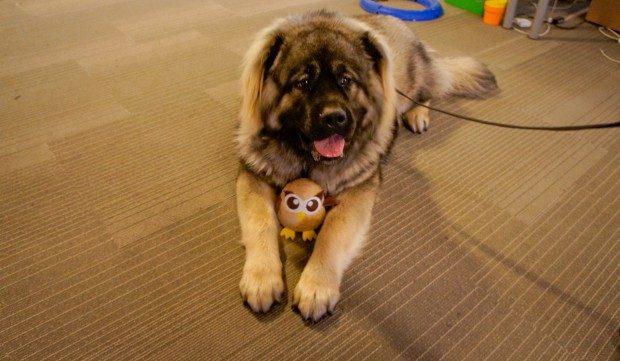 Dog-with-Owl