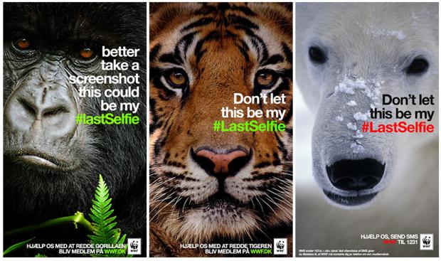 Snapchat WWF LastSelfie