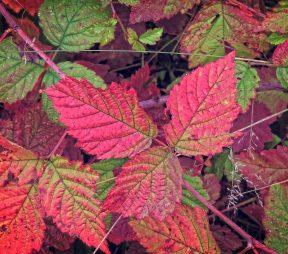 autunno su instagram