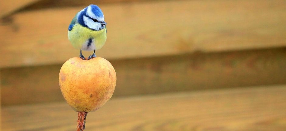 The Twitter Algorithm: What You Need to Know to Boost Organic Reach | Hootsuite Blog