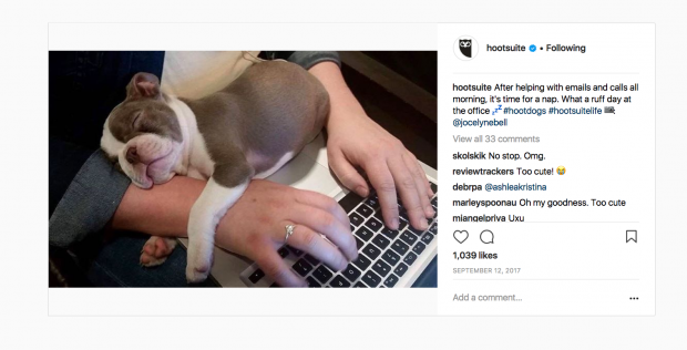 Screenshot of an Instagram post featuring a puppy asleep at a desk | Hootsuite Blog
