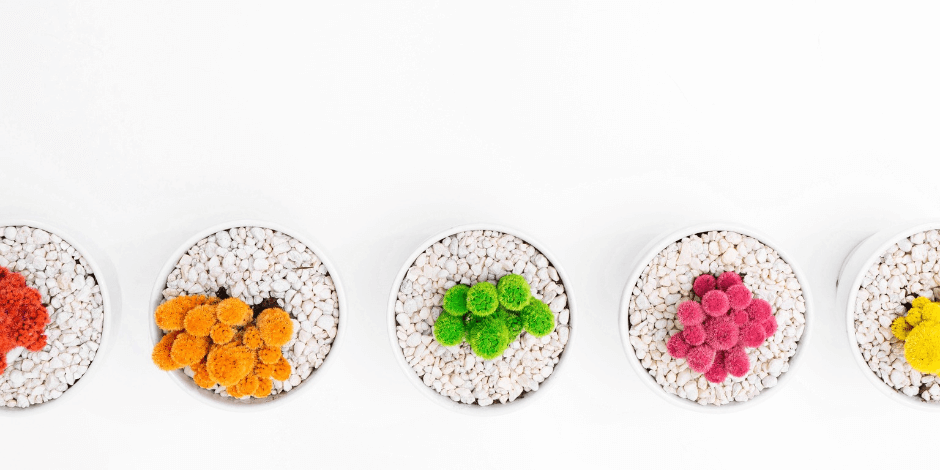 A row of 4 different colored succulents against a white background