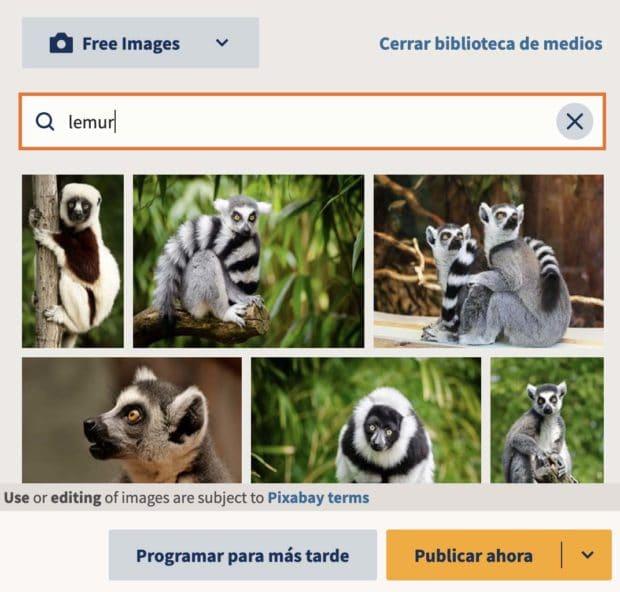 Imágenes de lémures de la biblioteca de medios de Hootsuite