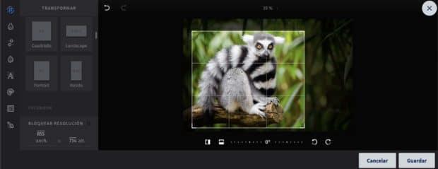 Close up de una fotografía de un lémur