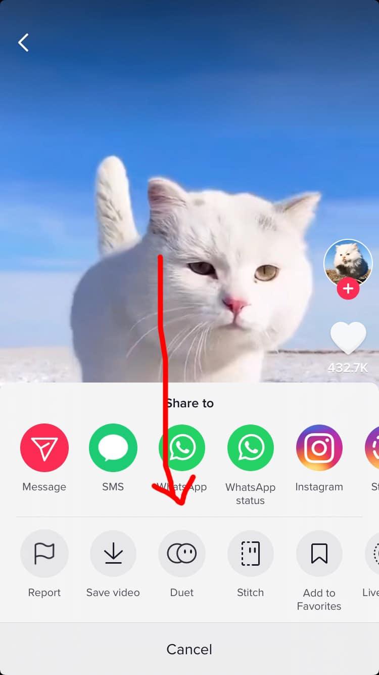 duet feature cat video