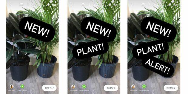 progression plant photos