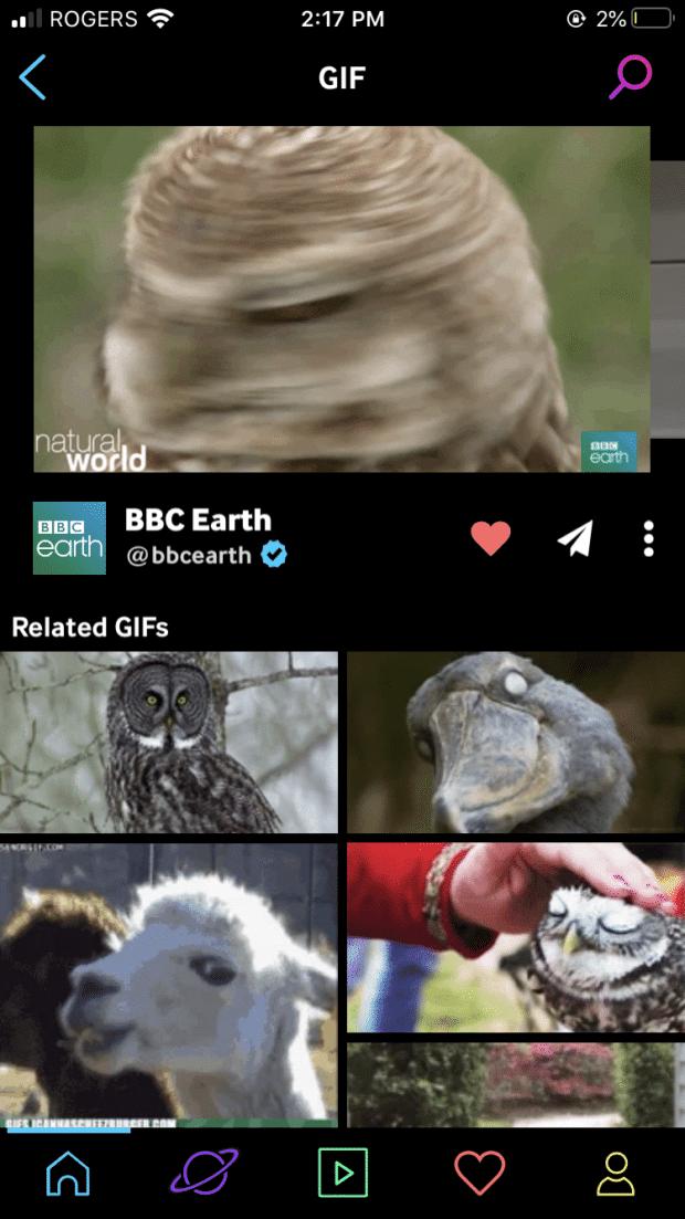 BBC Earth owl gifs