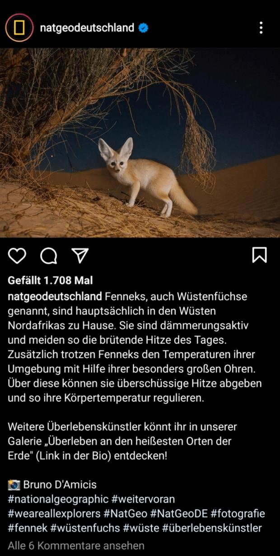 National Geographic Deutschland nutzt seine Instagram-Präsenz, um über Tiere wie die Fenneks alias Wüstenfüchse zu informieren.