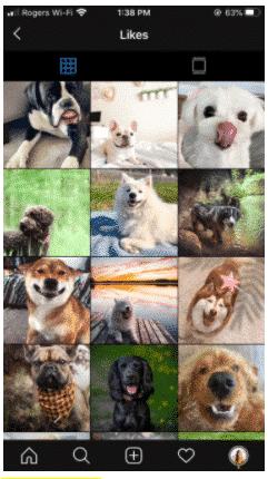 Photos que l'auteur a aimées (ce ne sont que des chiens)